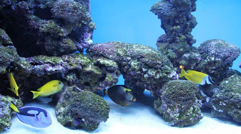 Oświetlenie akwarium